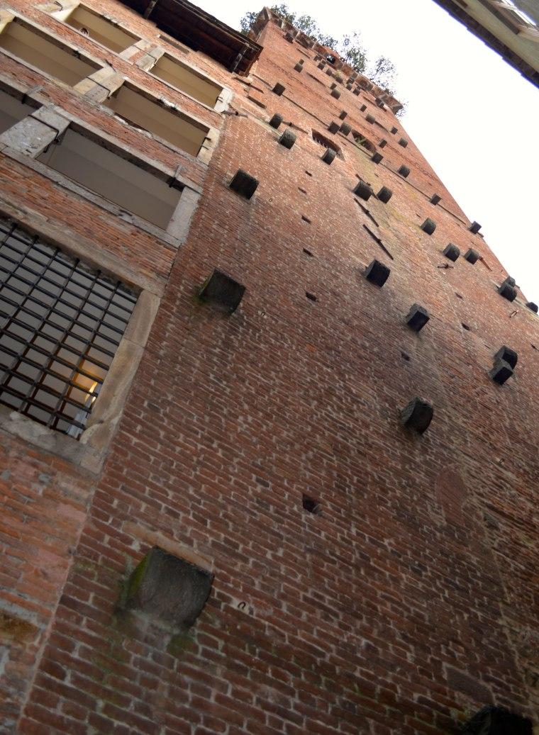 Torre Guinigi Lucca 2.jpg