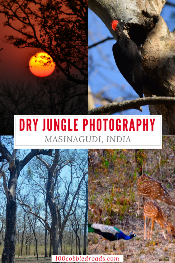Dry jungle photography at Masinagudi