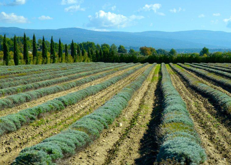Provence 5