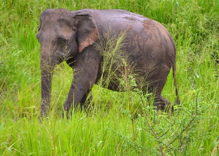 Habarana Hurulu_Eco Park_Sri Lanka_elephant safari_1