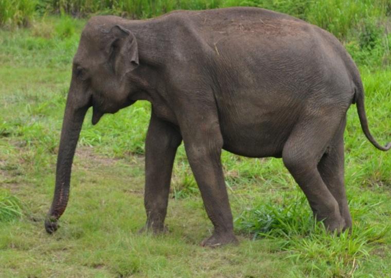 Habarana Hurulu_Eco Park_Sri Lanka_elephant safari_10