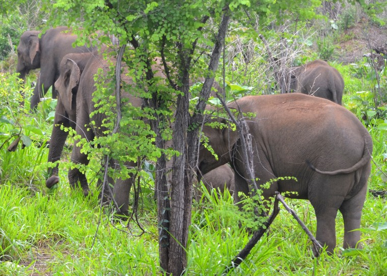 Habarana Hurulu_Eco Park_Sri Lanka_elephant safari_12