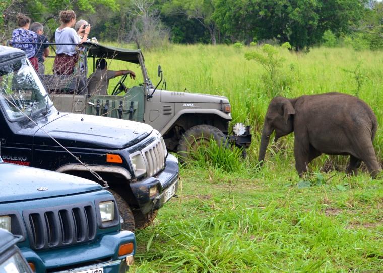 Habarana Hurulu_Eco Park_Sri Lanka_elephant safari_13.jpg