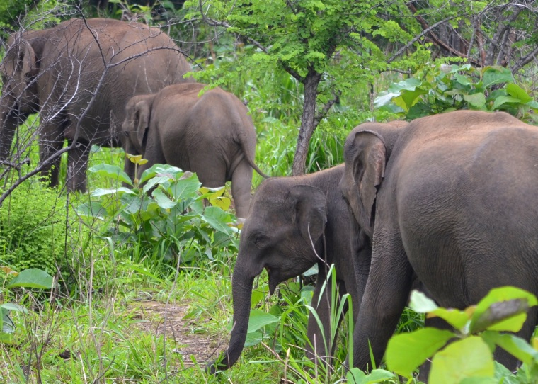 Habarana Hurulu_Eco Park_Sri Lanka_elephant safari_14