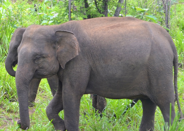 Habarana Hurulu_Eco Park_Sri Lanka_elephant safari_15