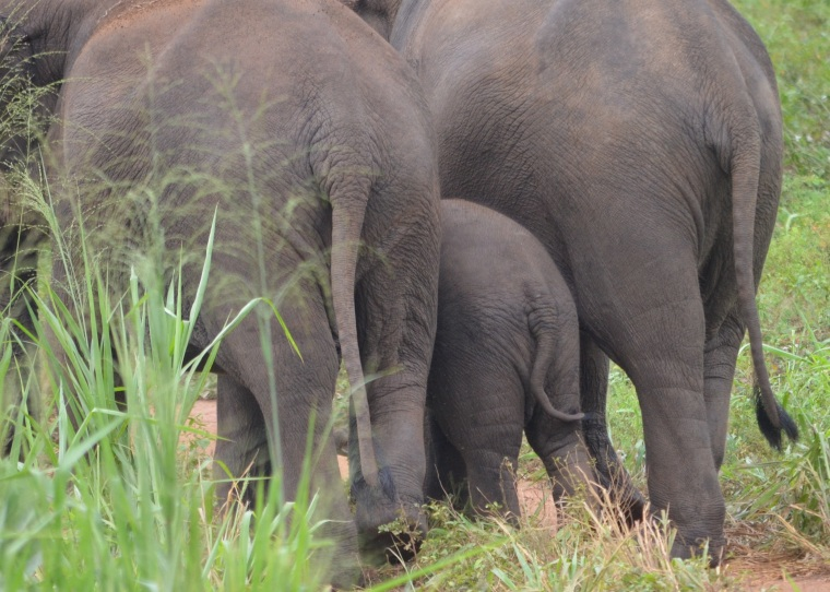 Habarana Hurulu_Eco Park_Sri Lanka_elephant safari_16.jpg