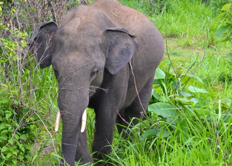 Habarana Hurulu_Eco Park_Sri Lanka_elephant safari_17.JPG