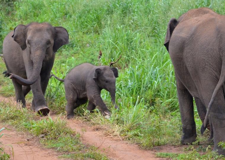 Habarana Hurulu_Eco Park_Sri Lanka_elephant safari_18.jpg