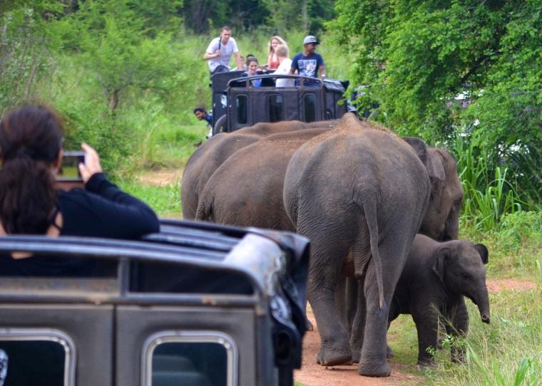 Habarana Hurulu_Eco Park_Sri Lanka_elephant safari_19.jpg