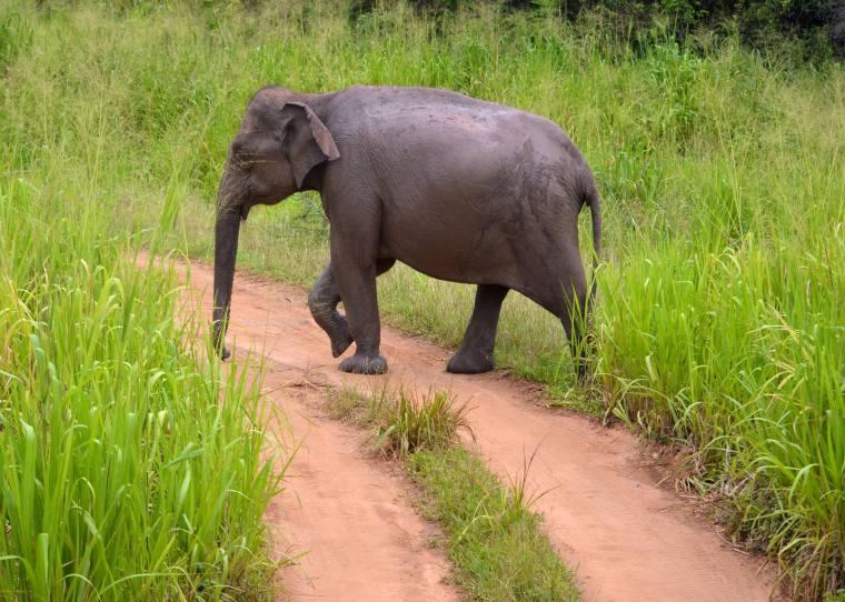Habarana Hurulu_Eco Park_Sri Lanka_elephant safari_2
