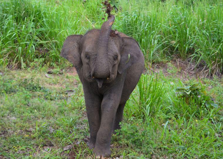 Habarana Hurulu_Eco Park_Sri Lanka_elephant safari_20.jpg