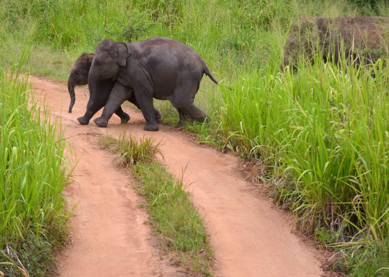 Habarana Hurulu_Eco Park_Sri Lanka_elephant safari_3