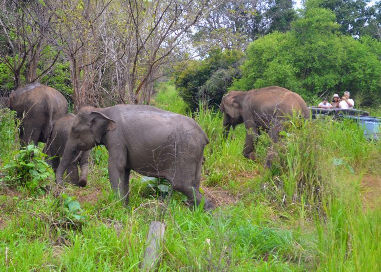 Habarana Hurulu_Eco Park_Sri Lanka_elephant safari_4