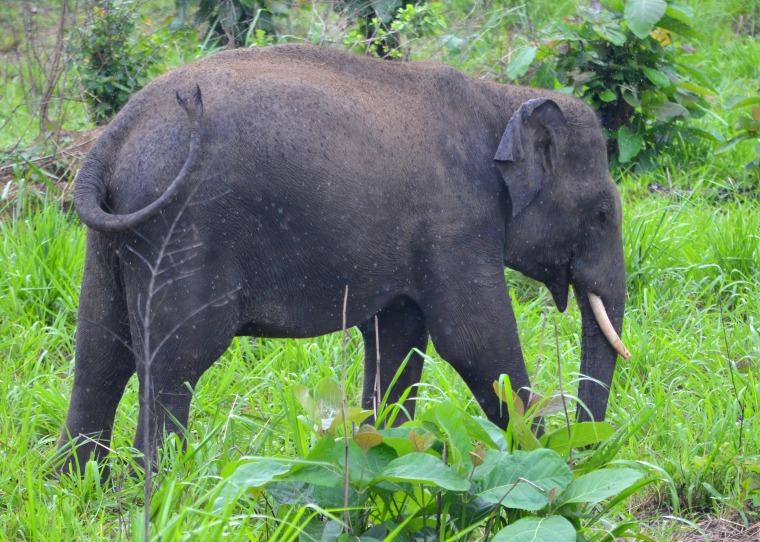 Habarana Hurulu_Eco Park_Sri Lanka_elephant safari_6.jpg