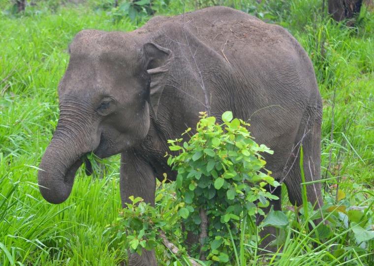 Habarana Hurulu_Eco Park_Sri Lanka_elephant safari_9.jpg