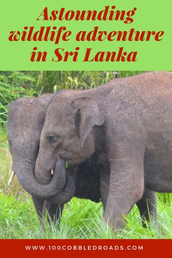 Wild elephant adventures in Habarana, Sri Lanka