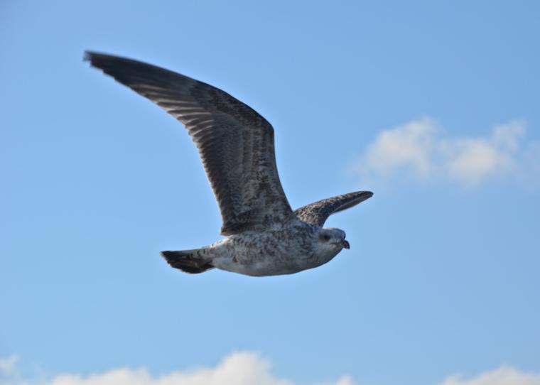 Seagulls_Istanbul_2.jpg