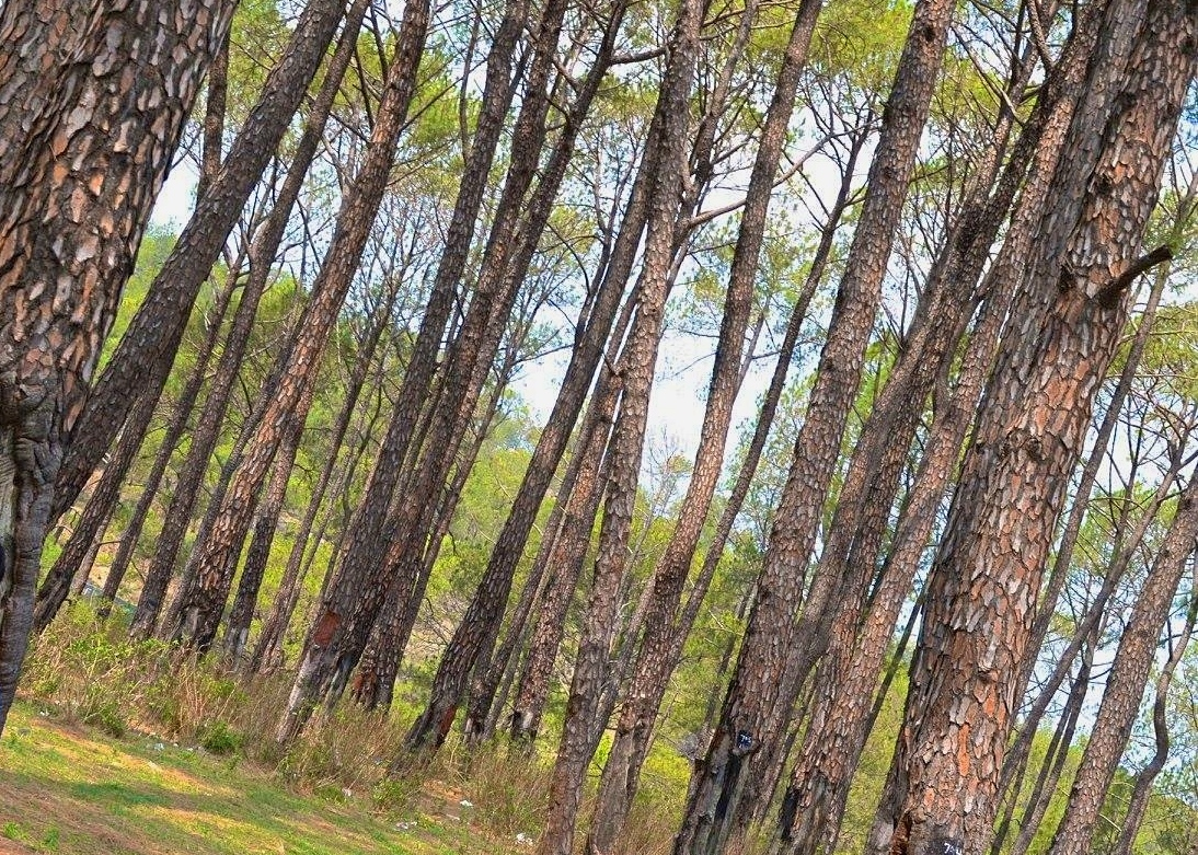 In the quest for peace and pines at Palampur
