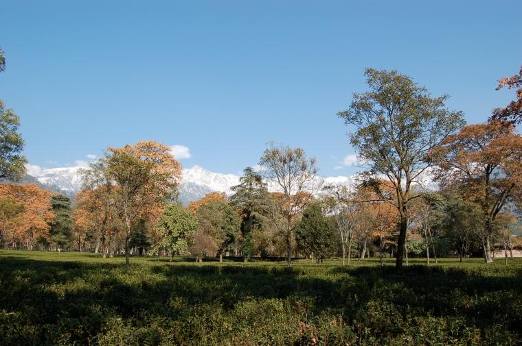 Palampur_Himachal_Pradesh_India.jpg