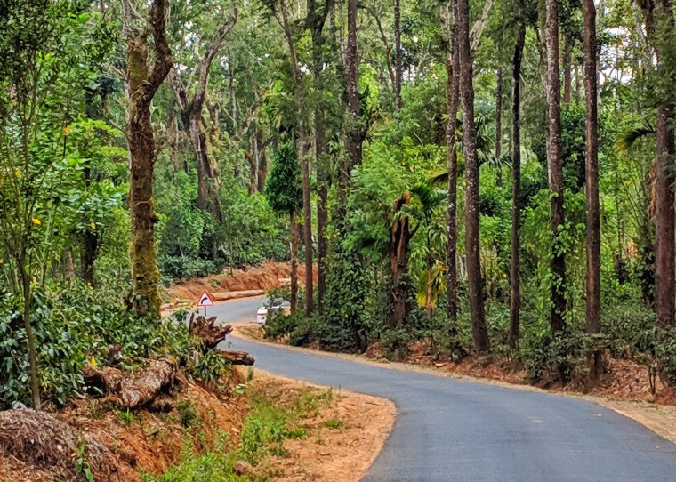 Coffee plantation_Madikeri_7.jpg