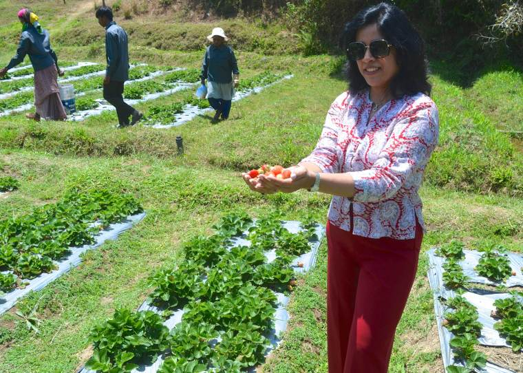 Strawberry farm_Taj Madikeri_Madikeri