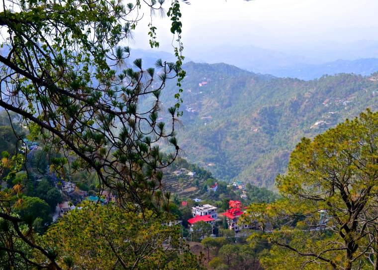 View_Ros Common_Kasauli