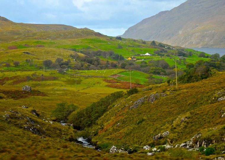 Connemara_Ireland_sheep_3