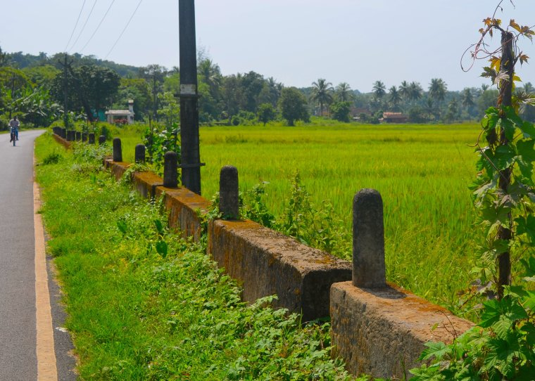 Goa_Rural Landscape_4