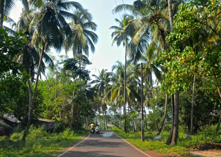 Goa_Rural Landscape_7