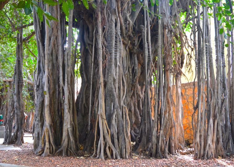 Madurai_Heritage Madurai_5
